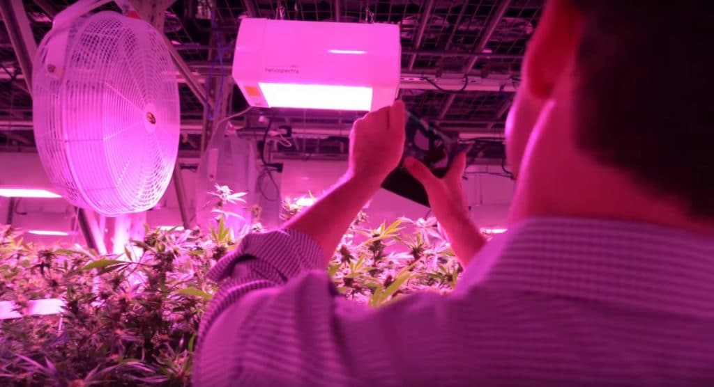 choosing best LED grow light