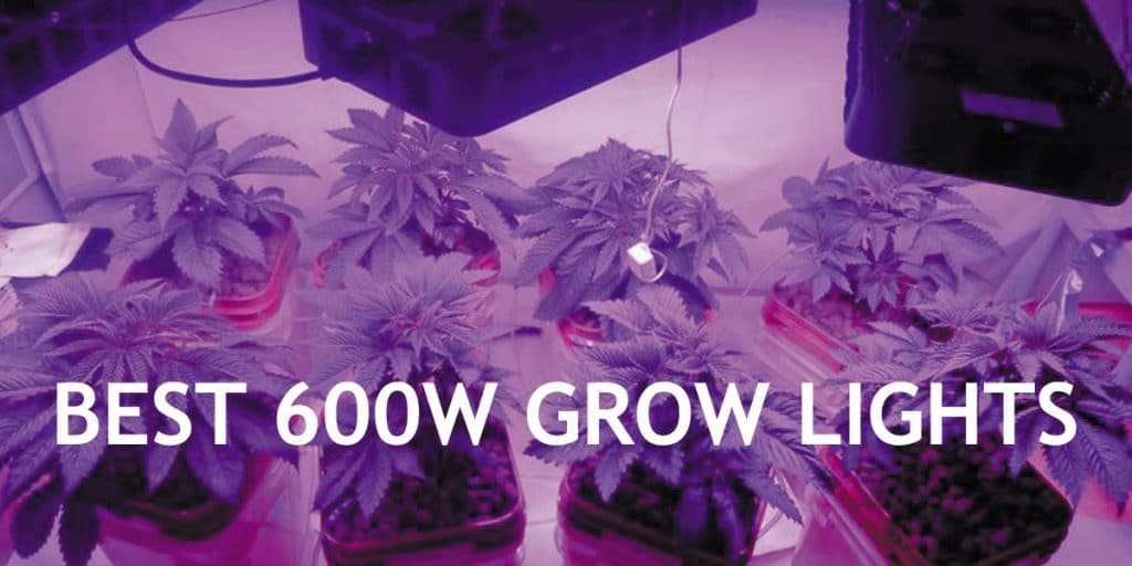 Best-600W-LED-Grow-Lights