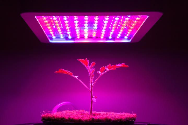 Best-LED-Grow-Lights