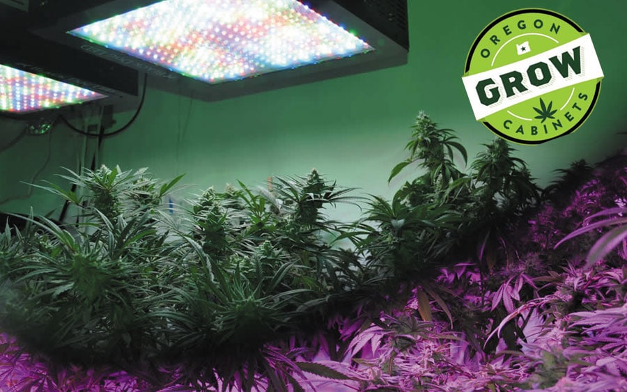 Full-Spectrum-Led-Grow-Lights