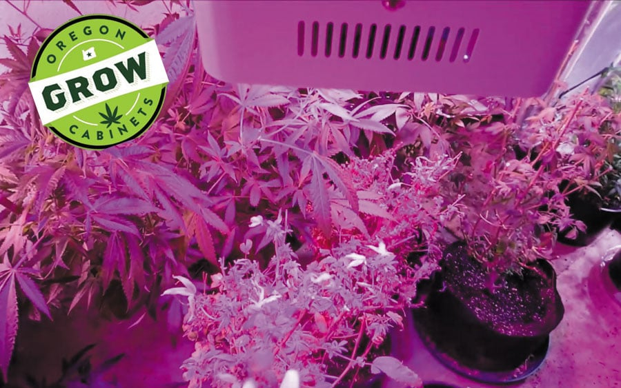 King-Plus-1000w-LED-Grow-Light