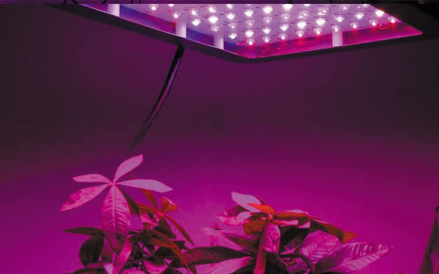 LED-Grow-Lights-for-Indoor-Plants