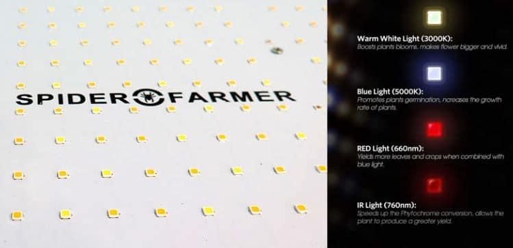 Spider Farmer Review Blue Light