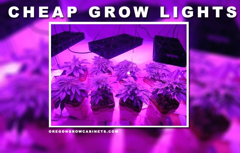 best-cheap-led-grow-lights
