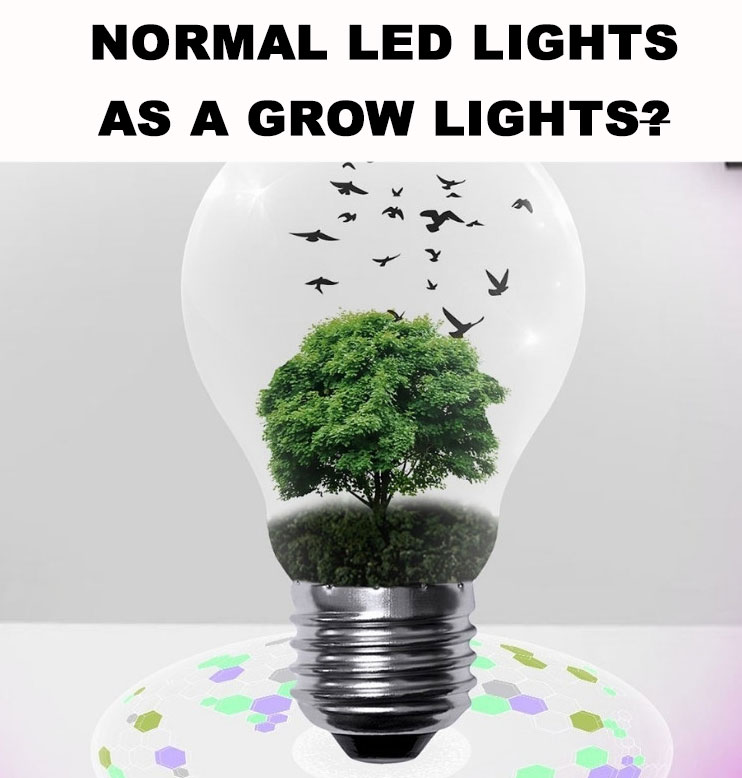 normal-led-lights-for-indoor-growing